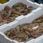 krabben-garnelen-ohne-lizenz